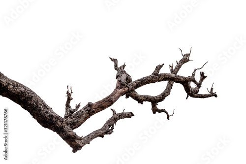 Photo Branch of dead tree with clipping path isolated on white background