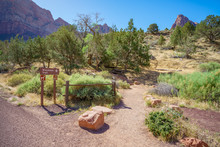 Hiking The Watchman Trail In Z...