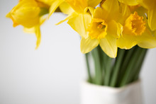 Daffodil Yellow Flowers Bunch Vase White Spring Time Simple Minimal Calm