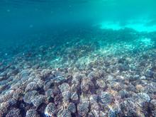 Fonds Sous-marins à Oman