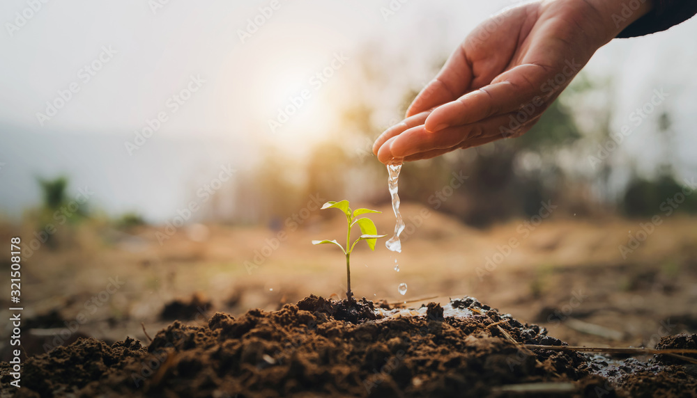 Fototapeta hand watering young plant in garden with sunrise
