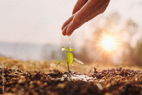 Obraz na plátně hand watering young plant in garden with sunrise