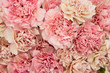 Floral blush and pink carnation flat lay flower background