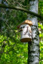 Stylowa Budka Dla Ptaków W Liściastym Lesie W Popołudniowym Słońcu