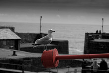Seagull By The Pier
