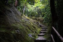 Japan, Kyoto, Steps In Forest