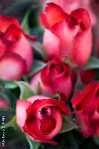 romantic, february 14, valentine's day, red rose, love, flower, romance, petal, gift, bouquet, rose, red, close-up, floral, beautiful, blossom, holiday, fresh, closeup, background, copy space, full fr