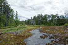 Bog In Bruce Peninsula Canada....