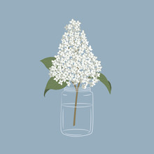 Lilac In A Glass Jar. White Li...
