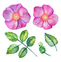 Watercolor Set With Wild Rose.