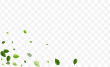 Swamp Foliage Vector Illustrat...
