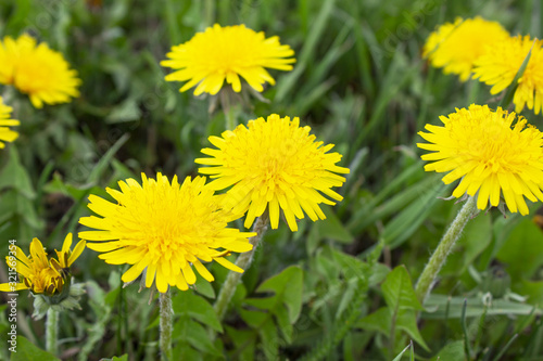 Photo Flower in garden at sunny summer or spring day