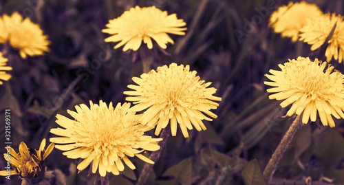 Flower in garden at sunny summer or spring day Canvas Print