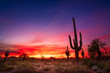 canvas print picture - Arizona desert landscape with Saguaro cactus at sunset