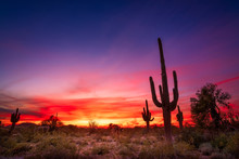 Arizona Desert Landscape With ...