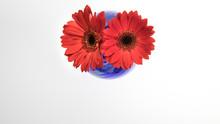Studio Lit Glass Vase With Two...