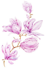 Hand drawn floral watercolor illustration. Branch on white background. Perfect for pattern, logo, scrapbooking, textile design, fabric, wallpaper, wrapping paper.