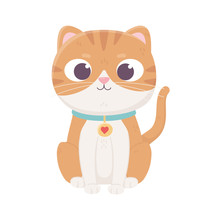 Cute Little Cat With Collar Domestic, Pets