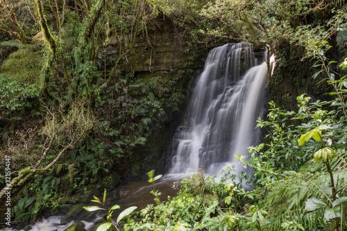 Horseshoe Falls amid the lush, green, podocarp and broadleaf rainforest in the Catlins, Otago, New Zealand Slika na platnu