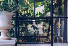 Green Plant Leaves Near Window...