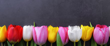 Multicolored Tulips In A Row Against A Dark Gray Stucco Wall.
