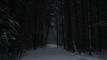 Scary Dark Path In The Winter Forest