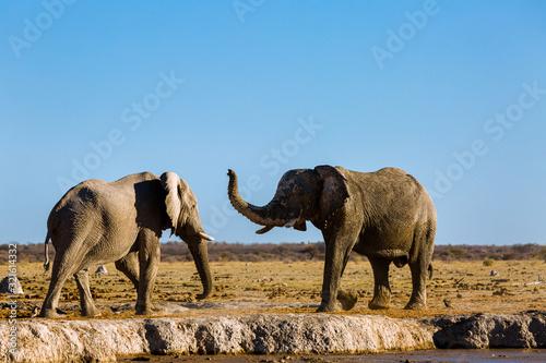 Photo Elefant