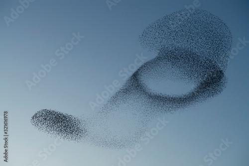Fotomural Beautiful large flock of starlings