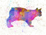 Fototapeta Dinusie - Manx cat 26 in watercolor