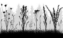 Grass With Weeds On Background...