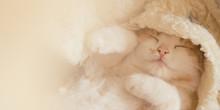Lovely Baby Kitten Sleeping In Cozy Blanket.