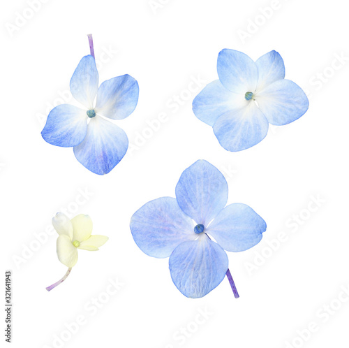 Set of small blue hydrangea flowers