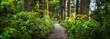 Leinwandbild Motiv Beautiful forest path as panorama background