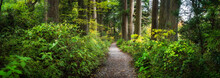 Beautiful Forest Path As Panor...