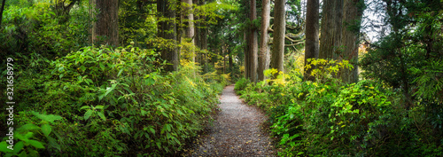 Fototapeta Beautiful forest path as panorama background obraz