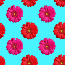 Seamless Pattern Of Red And Pink Gerbera Flowers On Blue Background Isolated, Bright Gerber Flower Repeating Ornament, Beautiful Daisy Summer Vibrant Floral Wallpaper, Vivid Decorative Print Backdrop