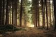 wschód słońca w lesie
