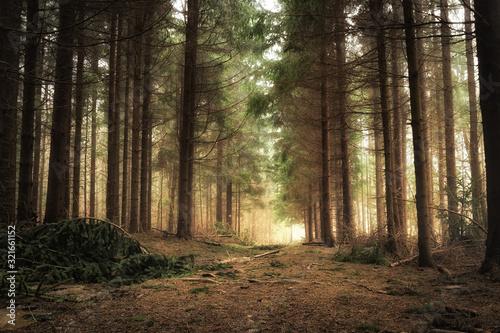 Fototapeta wschód słońca w lesie obraz