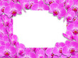 canvas print picture - Background with blank space and flowers orchids