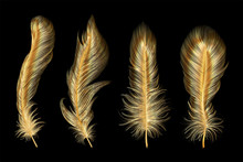 Set Of Gold  Feather. Vector I...