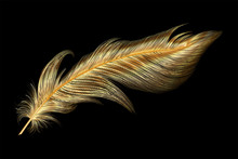 Art, Background, Beautiful, Beauty, Bird, Black, Bright, Calligraphy, Color, Colored, Colorful, Concept, Creative Feathers, Decoration, Draw, Drawing, Elegance, Element, Feather, Fluffy, Fly, Gold, Go