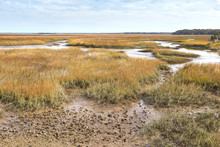 View Of Scenic Salt Marsh From Timacuan Preserve In Jacksonville, Florida