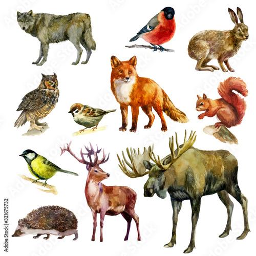 Watercolor illustration, set. Forest animals and birds. Squirrel, wolf, fox, hare, hedgehog, deer, elk, bullfinch, sparrow, tit, owl