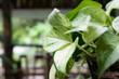 canvas print picture - Pflanze / Blume im tropioschen Regenwald