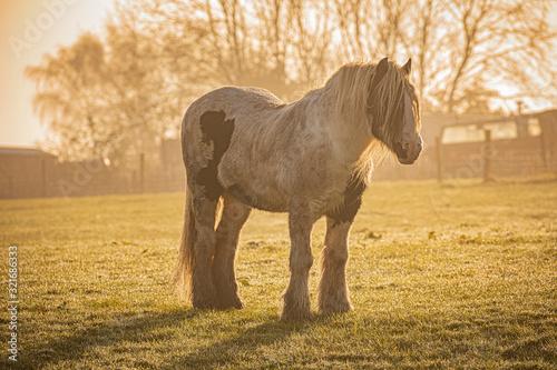 Photo horse in dawn field