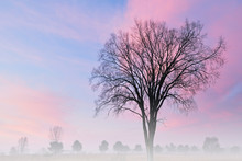 Landscape At Dawn Of Bare Tree...