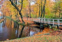 Autumn Look In Dutch Forest Wi...