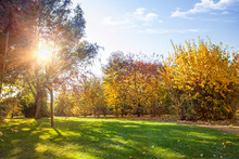 Autumn Park, Brightly Lit By T...