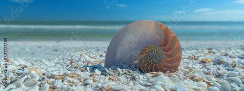 Stampa su Tela Beautfiful shell on the beach. Coastal dreams.