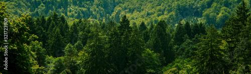 Fototapeta Dark green forest landscape obraz